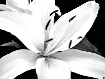 Photograph - Lilly White by Debra     Vatalaro