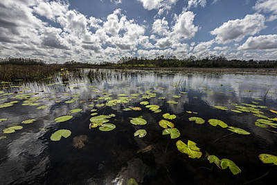 Photograph - Lillypads Of The Water by Jon Glaser