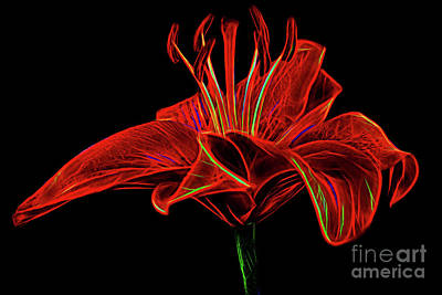 Photograph - Lily 119 by Ray Shrewsberry