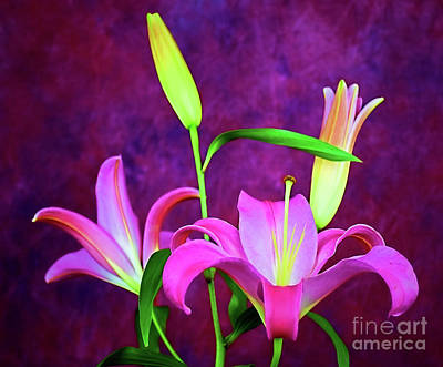 Photograph - Lily 140 by Ray Shrewsberry