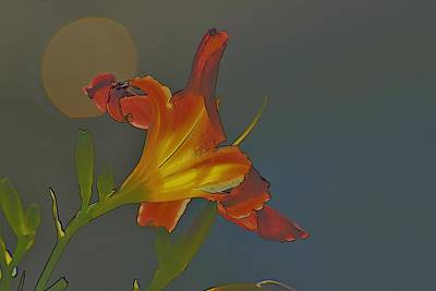 Impressionist Landscapes - Lily Abstract Dark Background Bright Flower by Linda Brody