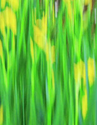 Photograph - Lily Abstract by John Vose