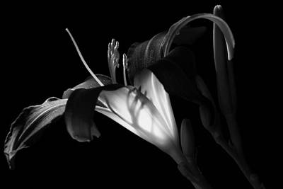 Photograph - Lily Ambiance Monochrome by Donna Kennedy