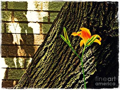 Photograph - Lily And Shadow by Sarah Loft