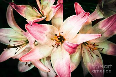 Lily Art Art Print by Lisa Phillips