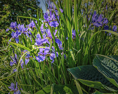 Photograph - Lily Blue #h8 by Leif Sohlman
