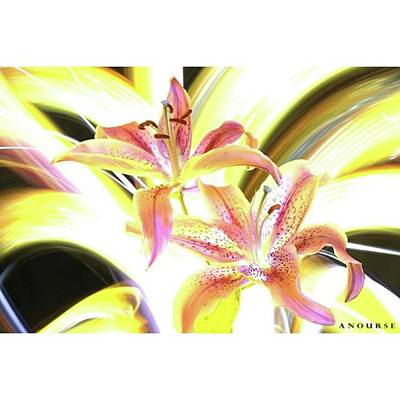 Lilies Photograph - Lily Burst #flower #notphotoshop by Andrew Nourse