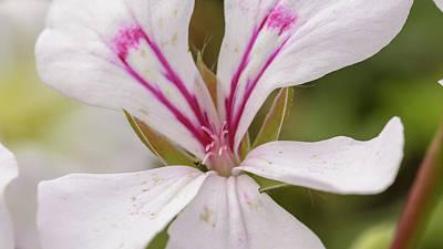 Photograph - Lily Family Flowers E by Jacek Wojnarowski