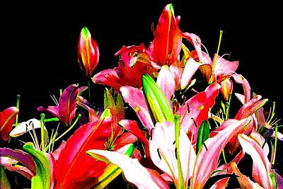 Photograph - Lily Fiesta by Marianne Dow