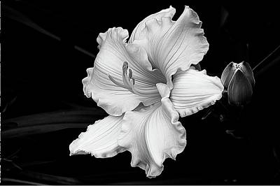 Photograph - Lily Float by Betsy Zimmerli