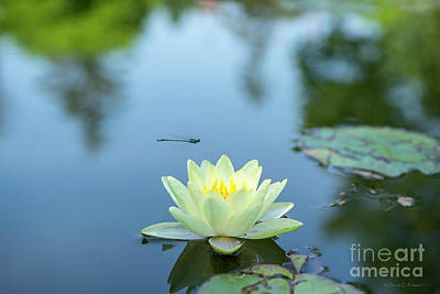 Photograph - Lily Flower And Dragonfly by David Arment