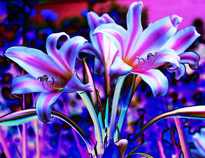 Photograph - Lily Glow Abstract by M Diane Bonaparte