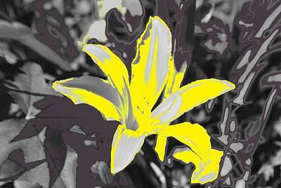 Photograph - Lily In Abstract by Eileen Brymer