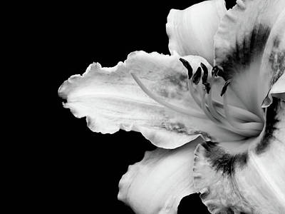 Daylily In Nature Photograph - Daylily In Black And White by Joey Shockley