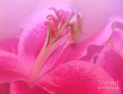 Photograph - Lily In Pink by Judi Bagwell