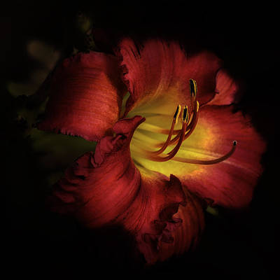 Photograph - Lily In Red by Julie Palencia