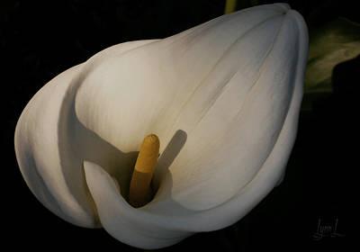 Lily In Shadow Art Print by S Lynn Lehman