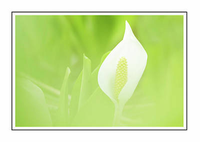 Design Photograph - Lily In The Green by Georgiana Romanovna
