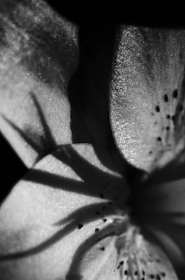 Lily In The Shadows Art Print by Christi Kraft