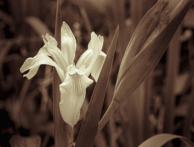 Photograph - Lily In The Wild by Carolyn Marshall