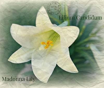 Lily Art Print by Kathy Bucari