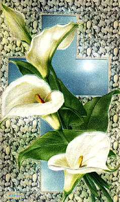 Lily Art Print by Kenneth Lambert