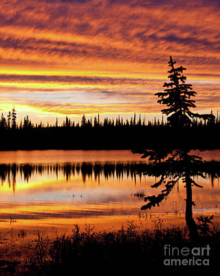 Photograph - Lily Lake Twilight Portrait by Katie LaSalle-Lowery