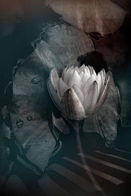 Photograph - Lily Light In The Darkness by Debra and Dave Vanderlaan