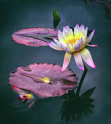 Waterlilies Digital Art - Lily Light by Jessica Jenney