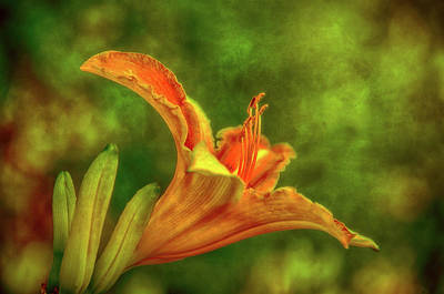 Photograph - Lily Light by Larry Goss