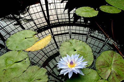 Photograph - Water Lily by Marcus Donner