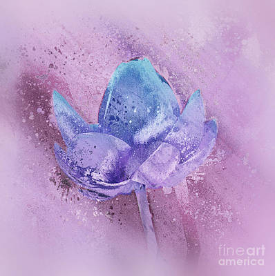 Waterlily Digital Art - Lily My Lovely - S113sqc77 by Variance Collections