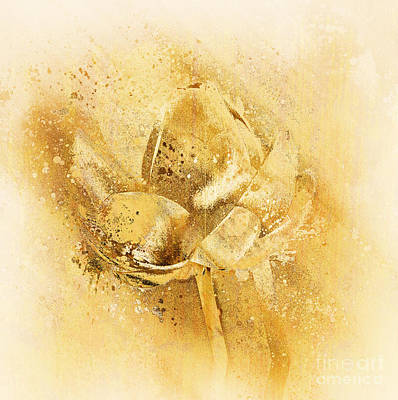 Digital Art - Lily My Lovely - S114sqc75v2 by Variance Collections