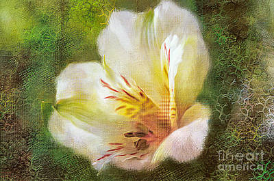 Digital Art - Lily Of The Incas by Lois Bryan