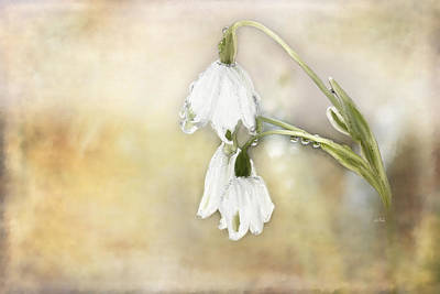 Lily Of The Valley Art Print by Angela A Stanton