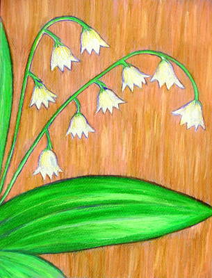 Drawing - Lily Of The Valley by Beth Akerman