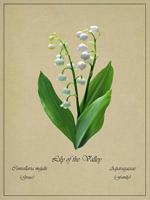 Digital Art - Lily Of The Valley Botanical by IM Spadecaller