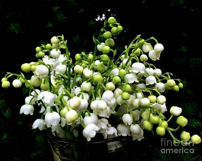 Photograph - Lily Of The Valley by Leea Baltes