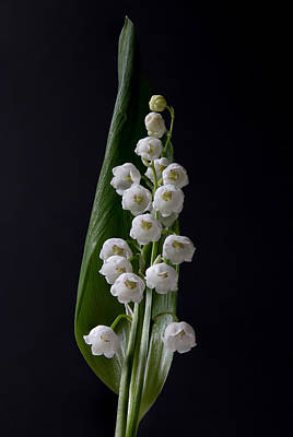 Lily Of The Valley On Black Art Print