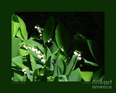 Photograph - Lily Of The Valley by Patricia Overmoyer