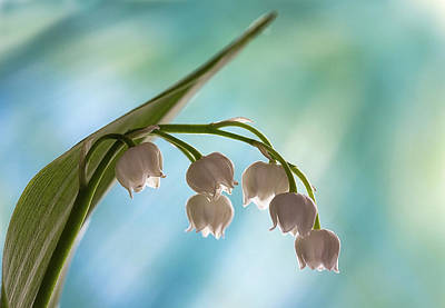 Photograph - Lily Of The Valley by Shirley Mitchell