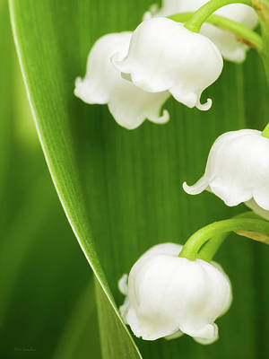 Photograph - Lily Of The Valley by Wim Lanclus