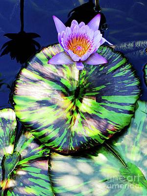 Photograph - Lily Pad And Lily by Ron Tackett