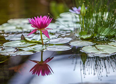 Photograph - Lily Pad Dreams by Robert  Aycock