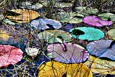 Photograph - Lily Pad Expression by Nina Silver