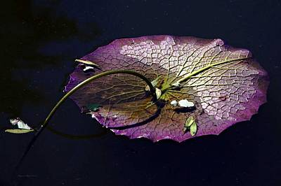 Photograph - Lily Pad Fractals by Suzanne Stout