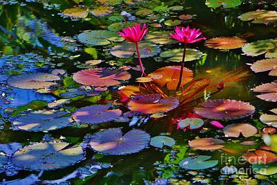 Lilies Royalty-Free and Rights-Managed Images - Lily Pad  by John Clark