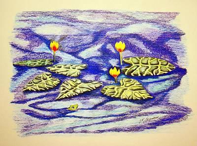 Lily Pad Pond Drawing - Lily Pad Pond by J R Seymour