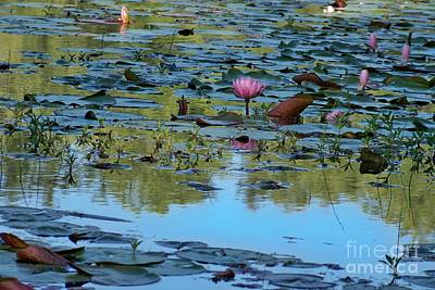 Photograph - Lily Pad Pond by Jean Fry