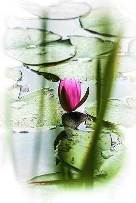 Photograph - Lily Pad Red - 1001 by G L Sarti